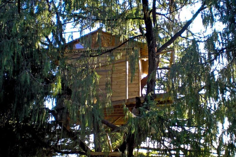 Viaggio di nozze: una casa sull'albero nella foresta amazzonica