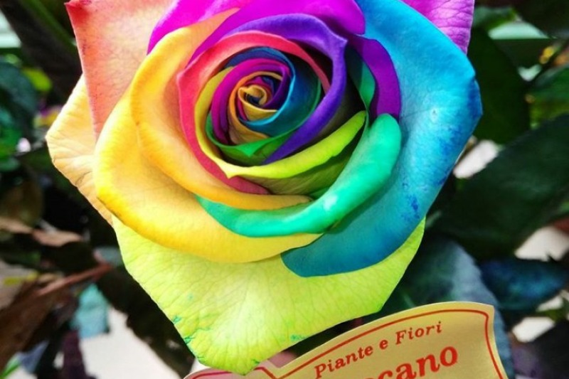 Piante e fiori Toscano